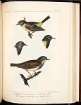 Birds--Pl LXXIX
