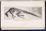 Fig. 8 Trachodon annectens, Marsh.