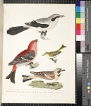 1. Great American strike, or butcher bird. 2. Pine grossbeak. 3. Ruby-crowned wren. 4. Shore lark, pp. 5 ff.