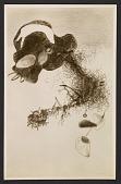 view <em>Anchored Root</em> by Peter Blume digital asset number 1