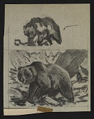 view Sketches of bears digital asset number 1
