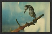 view Lee Bontecou postcard to Joseph Cornell digital asset number 1