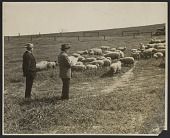 view John Steuart Curry sketching sheep digital asset number 1