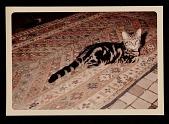 view Photograph of Elsie Driggs' cat digital asset number 1