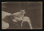 """view Cat """"mascot"""" on the Kit Kat Club Hudson canal boat trip digital asset number 1"""