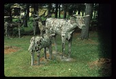 view Cow nursing calf digital asset number 1