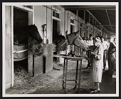 view Katherine Thayer Hobson working on Dr. Fager's head at Belmont Stakes digital asset number 1