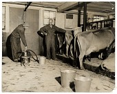 view Rockwell Kent in his dairy barn at Asgaar Farm digital asset number 1