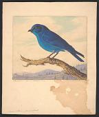 view Mountain Bluebird digital asset number 1