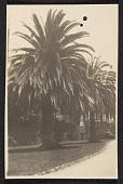 view The garden of the Anna Head School, Berkeley, California digital asset number 1