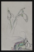 view Sketch of white flower digital asset number 1