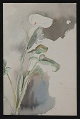 view Watercolor sketch of a lily digital asset number 1