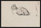 view Sketch of a cat digital asset number 1