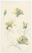 view Sketch of flowers from Tiverton, Rhode Island digital asset number 1