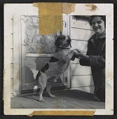 view Unidentified woman with a beagle digital asset number 1