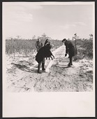 view Robert Smithson collecting sand in Pine Barrens, New Jersey digital asset number 1