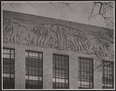 view Elephant frieze on the biology lab at Harvard digital asset number 1