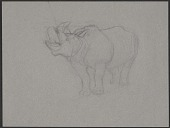 view Study of a rhinoceros digital asset number 1