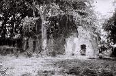 view Field Work in Bunce Island, Sierra Leone: Ruined Walls of the British Slave Castle digital asset: Field Work in Bunce Island, Sierra Leone: Ruined Walls of the British Slave Castle