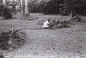 view Field Work in Aba, Eastern Region (Nigeria): Man working on Palm Tree Leaves digital asset: Field Work in Aba, Eastern Region (Nigeria): Man working on Palm Tree Leaves