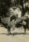 view Gullah man riding a bull digital asset: Gullah man riding a bull