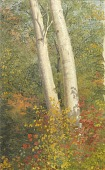 view Birch Trees in Autumn digital asset number 1