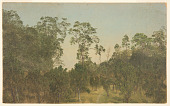 view Landscape with Trees, Jamaica digital asset number 1