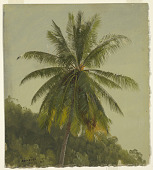 view Study of Palm Tree, Jamaica digital asset number 1