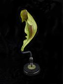 view Sarracenia Purpurea digital asset number 1