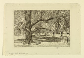 view The English Elms, Central Park digital asset number 1