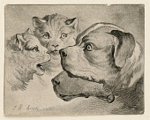 view Heads of Cats and Dogs digital asset number 1