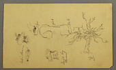 view Costume Design of a Jewish Boy described as a Pharisee, a Fig Tree, and Heads, Palestine digital asset number 1
