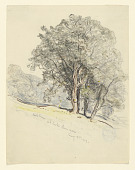 view Study of Oak Trees at Lake Dunmore, Vermont digital asset number 1