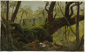 view Rain Forest, Jamaica digital asset number 1
