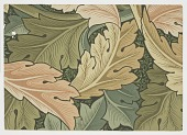view Acanthus digital asset number 1