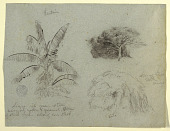 view Botanical Sketches, South America digital asset number 1