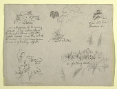 view Botanical Sketches, Colombia digital asset number 1