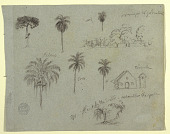 view Sketches from the Rio Magdalene, Columbia: Botanical Studies and a Church digital asset number 1