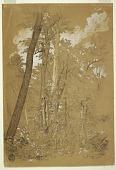 view Chestnut Trees on Goat Island, Niagara River, New York digital asset number 1