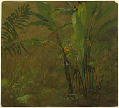 view Botanical Studies from Jamaica, West Indies digital asset number 1