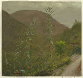 view Wild Sugar Cane, Jamaica digital asset number 1