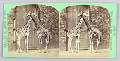 view Zoo animals digital asset number 1