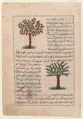 view Folio from <em>Aja'ib al-makhluqat</em> (Wonders of Creation) by al-Qazvini; recto: Apple Tree (Tuffah), Cone-Bearing Fir (Tannub); verso: Mulberry Tree (Tut), Fig Tree digital asset number 1