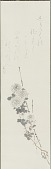 view White Chrysanthemums digital asset number 1