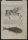 view Water Horse (Faras al-Ma), Whale (Qatus), from <em>Aja'ib al-makhluqat</em> (Wonders of Creation) by al-Qazvini digital asset number 1