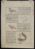 view Whistler (Safir), Sea Bird (Ta'ir al-Bahr), Peacock (Ta'wa'us), from <em>Aja'ib al-makhluqat</em> (Wonders of Creation) by al-Qazvini digital asset number 1