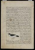view Crow (Ghurab), from <em>Aja'ib al-makhluqat</em> (Wonders of Creation) by al-Qazvini digital asset number 1