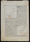 view Crane (Kurki), Singing Bird (Karwan), from <em>Aja'ib al-makhluqat</em> (Wonders of Creation) by al-Qazvini digital asset number 1
