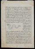 view Viper (Af'a'), from <em>Aja'ib al-makhluqat</em> (Wonders of Creation) by al-Qazvini digital asset number 1