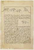 view Folio from <em>Aja'ib al-makhluqat</em> (Wonders of Creation) by al-Qazvini; recto: Mice (Far); verso: text digital asset number 1
